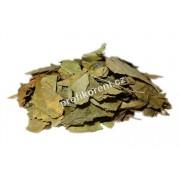 Ginkgo biloba listy (100g)
