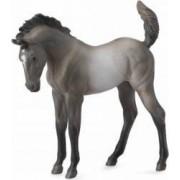 Mustang - Grulla manz