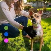 Sparnet Smarta borsthandskar för hund och katt (2 par)