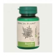 Boswellia, 60 tablete