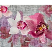 Fototapeta FTNXXL 1148 Fototapeta, vliesová 360x270cm. Orchideje