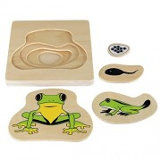Kid Advance Montessori Frog Life-Cycle Puzzle