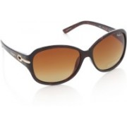 Pepe Jeans Over-sized Sunglasses(Brown)