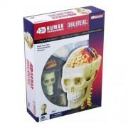 Warm Fuzzy Toys Human Cranial Nerve Skull 4 D Vision Anatomy Model Kit
