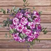 Violet Hill - Flores a domicilio