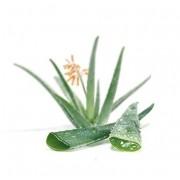 Crème met Arganolie en Aloe Vera - 60 ml Supernaturals