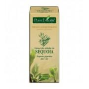 Extract din mladite de sequoia, 50 ml