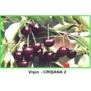 Visin Crisana 2