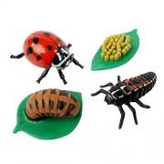 Life Cycle Stages -Ladybug