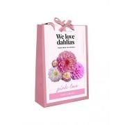 We Love Dahlias - Pink Love