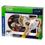 Комплект за сглобяване, Анатомия Тигър, 871503