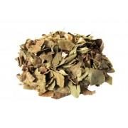 Chá de Abacateiro (Persea Americana)