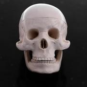 ELECTROPRIME® Human Anatomical Anatomy Skull Head Medical Teaching Model Educational Tools