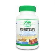 Cordyceps Sinensis 200 mg (90 capsule)