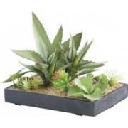 Carlo Milano Tableau végétal artificiel avec cadre - Succulentes - 30 x 20 cm