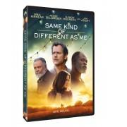 Same kind of different as me:Greg Kinnear,Renee Zellweger,Djimon Hounsou,Jon Voight - Altfel,dar la fel (DVD)