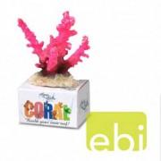 EBI AQUA DELLA CORAL MODULE S staghorn coral rosa 10x8,8x4,8cm