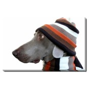 Tablou Canvas Funny Dog