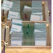 Preparate pentru microscop (25 buc, de la unicelulare la insecte) (C)