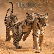 Merkloos Tijger 2021 dieren wandkalender