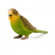 Hullámos papagáj zöld S