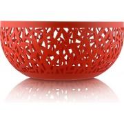 Misa na owoce Cactus! czerwona 21 cm