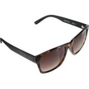 Swiss Military Wayfarer Sunglasses(Brown)