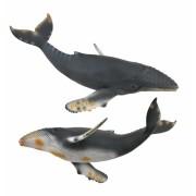 Balena cu cocoasa - Collecta