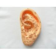 Model ureche studiu acupunctura 13 cm (cod S04)