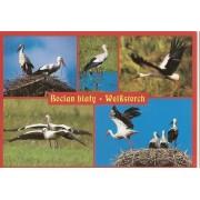 Bociany - widokówka (06161)