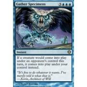 Magic: the Gathering - Gather Specimens - Shards of Alara - Foil