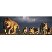 Educa Jigsaw Puzzle - Lion Family - 1000 pieces