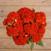 Orange Queen-Flores ao domicílio