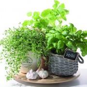 Lunchservet Flavor of Herbs
