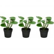 Shoppartners 3x Groene/witte Pilea pannenkoekenplant kunstplanten 23 cm met zwarte pot - Kunstplanten