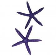 Geen Decoratieve zeesterren paars
