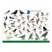 Kijkkaart Vogels