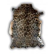 ALFOMBRA DE PIEL DE BLESBOK (ANTILOPE AFRICANO) IMITACION PANTERA GRANDE
