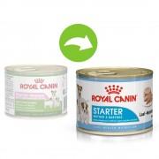 Royal Canin Starter Mousse Mother & Babydog Hrană umedă - 24 x 195 g