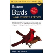 A Peterson Field Guide to the Birds of Eastern and Central North America: Large Format Edition, Paperback
