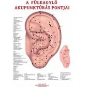 Fülakupunktúrás térkép-magyar
