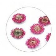 Flores Secas Color-007