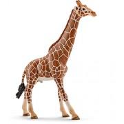 Schleich North America Male Giraffe Toy Figure