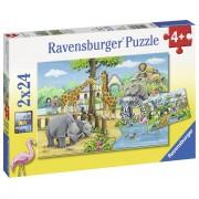 PUZZLE ZOO, 2X24 PIESE - RAVENSBURGER (RVSPC07806)