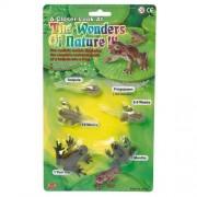 AAA 12839 Tadpole to Frog Metamorphosis Life Cycle of the Frog Toy