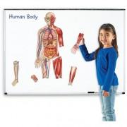 Macheta corpul uman - Set magnetic
