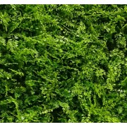 VV 6117 GreenWall small-leaves-perete verde artificial,sintetic 1x1m