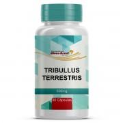 Cápsulas de Tribullus Terrestris Extrato Seco 40% 500mg Com 90 Cápsulas Manipuladas
