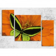 Tablou canvas cu fluture pe floare oranj 100 x 70 cm