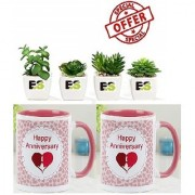 MIX COMBO OF WHITE SECCULENT LIVE PLANT With Gift Anniversary Gift Mug